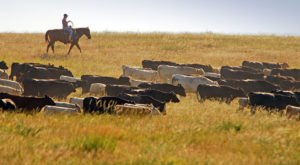 8 Undeniable Differences Between The Eastern And Western Parts Of South Dakota