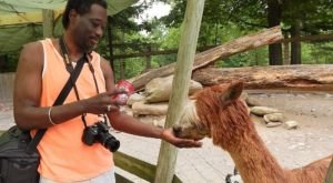 Most People Don't Know This Maryland Zoo And Adventure Park Even Exists