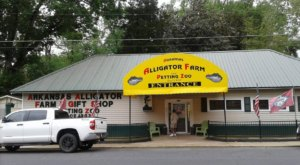 Have A Real Life Adventure At This Arkansas Alligator Farm