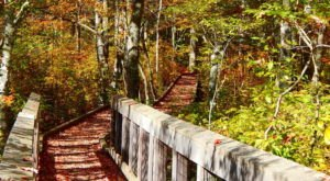 This Beautiful Boardwalk Trail In Rhode Island Is The Most Unique Hike Around