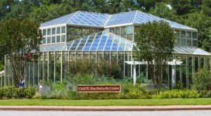 You'll Want To Plan A Day Trip To Georgia's Magical Butterfly House