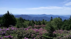 This Easy Hike In North Carolina Will Transport You Into A Sea Of Color