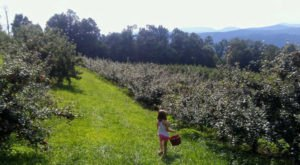 You'll Positively Love A Trip To This Orchard In The Sky In North Carolina