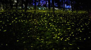 This Firefly Phenomenon In Massachusetts Will Enchant You In The Best Way Possible