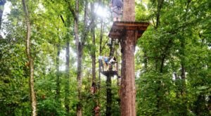 The Treetop Trail That Will Show You A Side Of Arkansas You've Never Seen Before