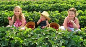 You'll Have Loads Of Fun At These 7 Pick-Your-Own Fruit Farms In Iowa