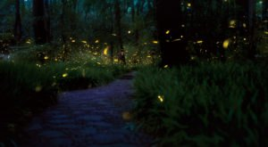 This Firefly Phenomenon In New York Will Enchant You In The Best Way Possible