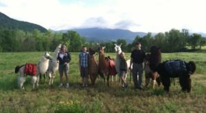 Go Llama Hiking Through The Forest On This Unforgettable Tennessee Adventure