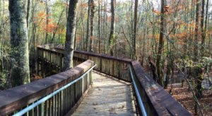 This Beautiful Boardwalk Trail In Louisiana Is The Most Unique Hike Around