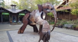Most People Don't Know About This Underrated Zoo Hiding In Mississippi
