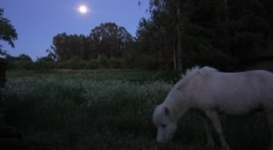 This Moonlight Horseback Tour In Pennsylvania Is Like Nothing You've Experienced Before