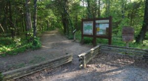 Take These 8 Scenic Horse Trails In Illinois For A Peaceful Ride