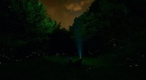 This Firefly Phenomenon In Tennessee Will Enchant You In The Best Way Possible
