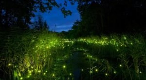 This Firefly Phenomenon In Texas Will Enchant You In The Best Way Possible