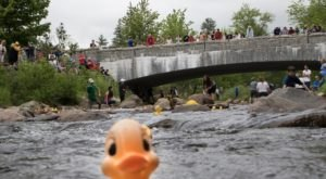 The Quirky Rubber Duck Race That Is So New Hampshire