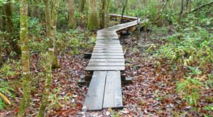 This Beautiful Boardwalk Trail In North Carolina Is The Most Unique Hike Around
