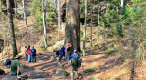 Explore Alabama's Best Hiking Trails Within This Fantastic Forest