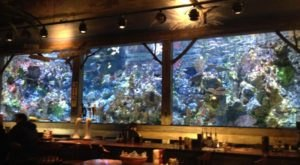 Visit Mississippi's Aquarium Restaurant For An Unforgettable Dining Experience