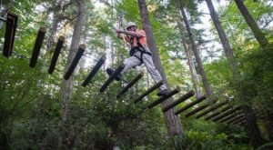 The Treetop Trail That Will Show You A Side Of Washington You've Never Seen Before