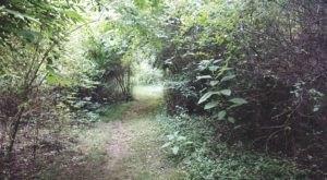 The Secret Garden Hike In Arkansas Will Make You Feel Like You're In A Fairytale