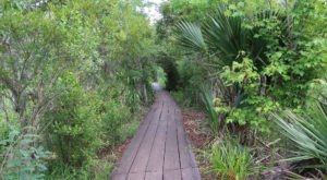 This Beautiful Boardwalk Trail Near New Orleans Is The Most Unique Hike Around