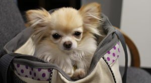 Here's The Best Way To Travel If Your Four-Legged Friend Is Joining You