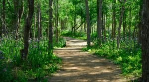 This Underrated State Park Near Austin Will Make You Feel Like You're Hiking Through The Tropics