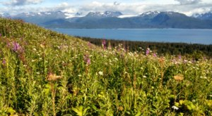 This Easy Wildflower Hike In Alaska Will Transport You Into A Sea Of Color