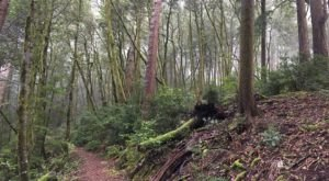 The Trail In Oregon That Will Lead You On An Adventure Like No Other
