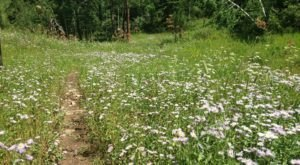 This Easy Wildflower Hike In South Dakota Will Transport You Into A Sea Of Color