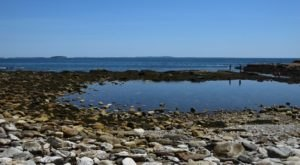 7 Tremendous Tidal Pools Hiding In Maine You'll Want To Check Out This Summer