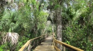 This Beautiful Boardwalk Trail In Florida Is The Most Unique Hike Around
