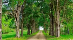 Maryland's Tunnel Of Trees Is Positively Magical And You Need To Visit