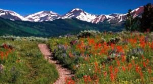 The One Wildflower Hike In The U.S. That Will Completely Mesmerize You