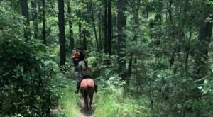 This Incredible Horseback Riding Trail Will Show You A New Side Of Louisiana