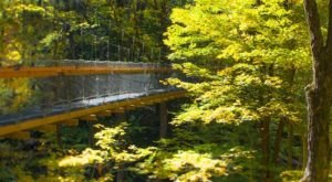 This Canopy Walk Near Cleveland Will Make Your Stomach Drop