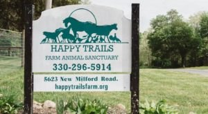 There's A Rescue Farm Near Cleveland And You're Going To Love It