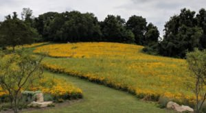 Get Lost In A Field Of Color At This Enchanting Meadow Near Pittsburgh