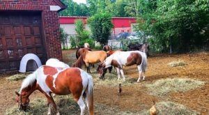 There's A Pony Farm Near Detroit And You're Going To Love It