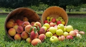 If You Only Visit One Tennessee Orchard This Year Make It This One