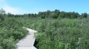 This Minnesota Park Has Endless Boardwalks And You'll Want To Explore Them All