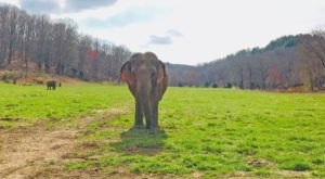 There's So Much To Love About This Unique Elephant Sanctuary Just Outside Of Nashville