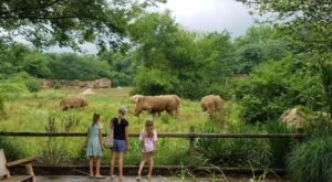 Most People Don't Know You Can Stay Overnight At This Extraordinary Zoo In Tennessee