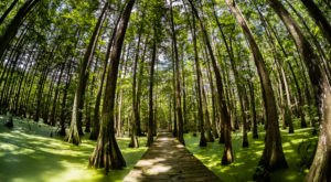 This Louisiana Park Has Endless Boardwalks And You'll Want To Explore Them All