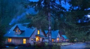 You'll Never Forget A Night Spent In This Ancient Forest In Oregon