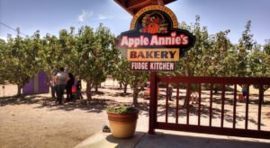 If You Only Visit One Arizona Orchard This Year Make It This One