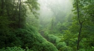 The Greenest Spot In Oklahoma Will Transport You To A Lush New World