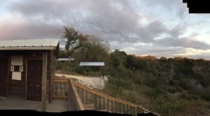 This Unique Destination Near Austin Is Home To Over 3 Million Bats