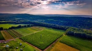 Get Lost In This Awesome 11-Acre Corn Maze In Pennsylvania This Autumn