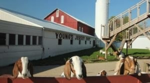 You'll Have Loads Of Fun At This Dairy Farm In Ohio With Incredible Ice Cream And Cheese Curds